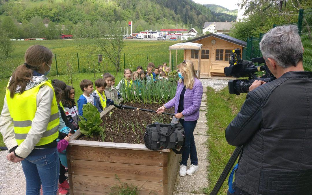 Kaj imajo skupnega čebele, bralna značka in šolski vrt?